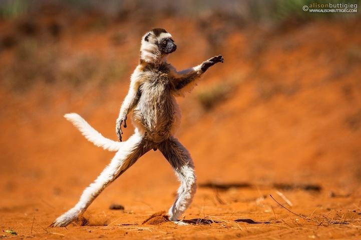 拉伸运动的照片,有些颇有天赋的动物们仿佛是在做高难度瑜伽姿势.