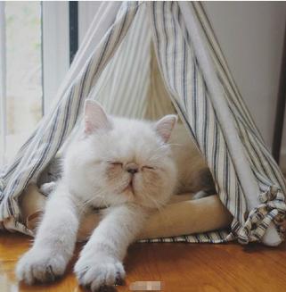 可爱猫猫犯困动态图